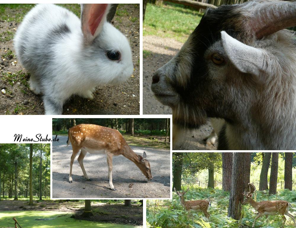 Wildpark Hanau Ziege Damhirsch Kaninschen