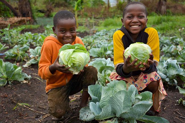 Mit World Vision Patenschaft die erste Ernte, meinestube